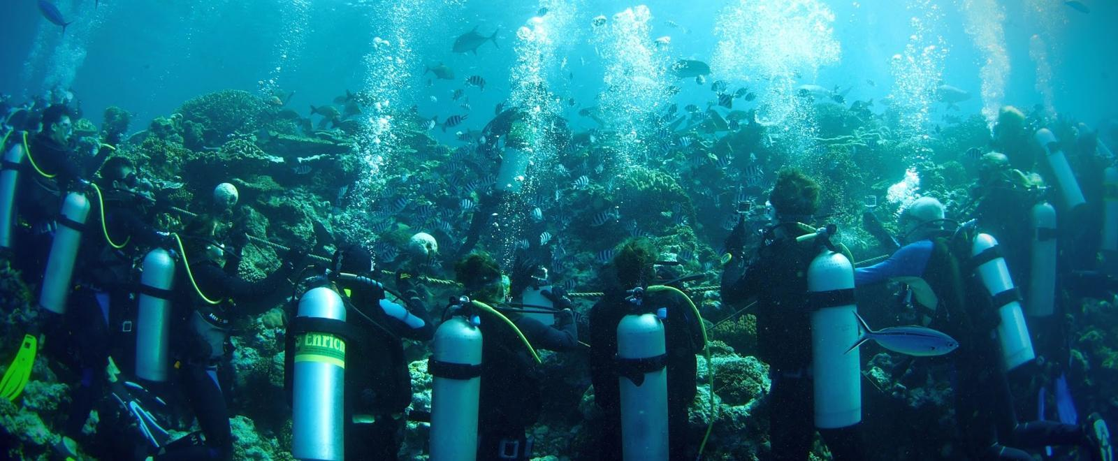 Volunteers scuba dive during our Shark Conservation Project in Fiji for high school students